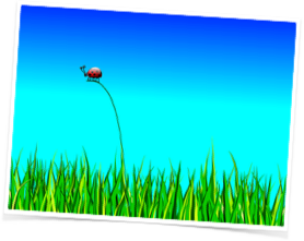 Ladybug slider framed